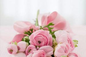 roses-142876_640 (1)